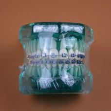 Модель челюсти с ортодонтическими брекетами BLUE Model Number B7-02 for Dental study, teaching, stud